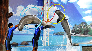 Pattaya Dolphin World (half day)